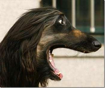 Собака удивлена