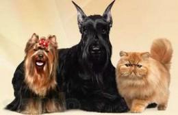 Две собаки и кошка
