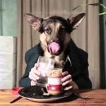 Собака в пиджаке ест за столом