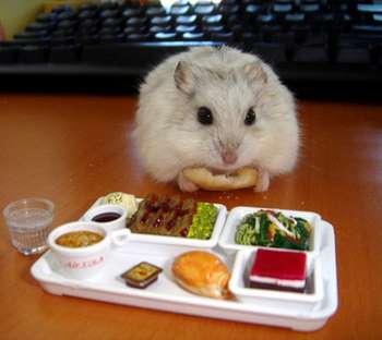 Джунгарик перед подносом с разной едой