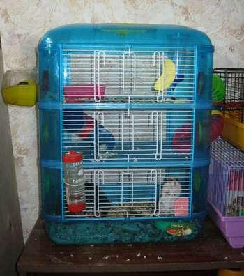 Многоэтажная клетка для джунгарского хомяка