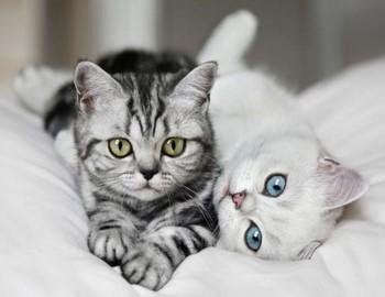 Две кошки валяются