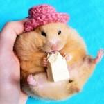 Хомяк в шляпе ест кусочек сыра
