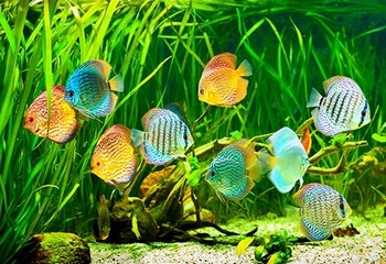 Стая рыбок в аквариуме