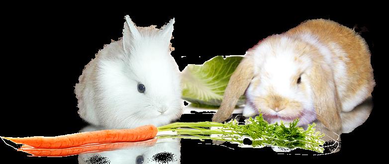 Два декоративных кролика и морковка