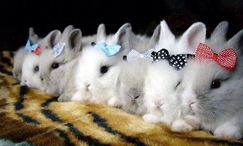 Смешные кролики с бантиками в ряд