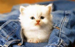 Брутальное имя коту