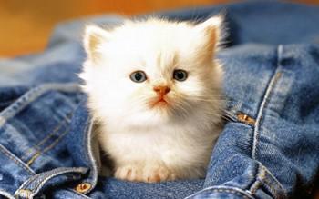 как назвать кошку красиво девочку необычно нас три