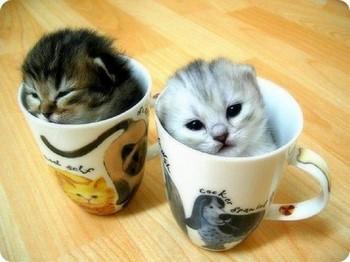 Два котенка в кружках