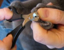 Подстригают когти кошке