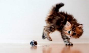 Смешной разноцветный котенок