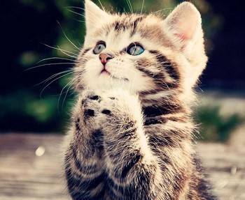 Котенок сложил лапки