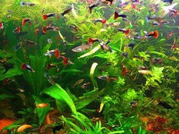 Много маленьких рыбок