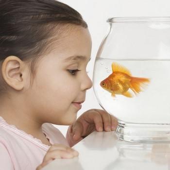 Ребенок смотрит в аквариум с золотой рыбкой