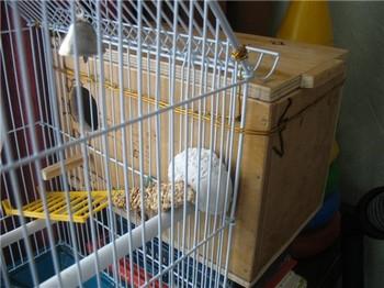 Домик для корелл. Гнездовой ящик для корелл 73