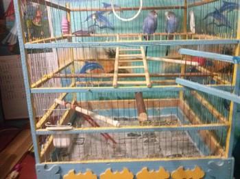 Многоуровневая клетка с волнистыми попугаями