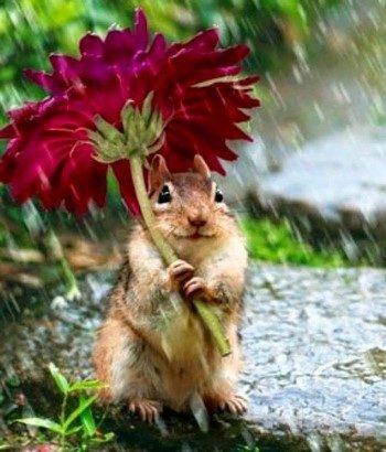 Бурундук под цветком