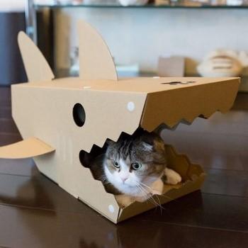 Кот сидит в сделанной коробке