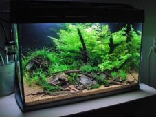 Красивый зеленый аквариум