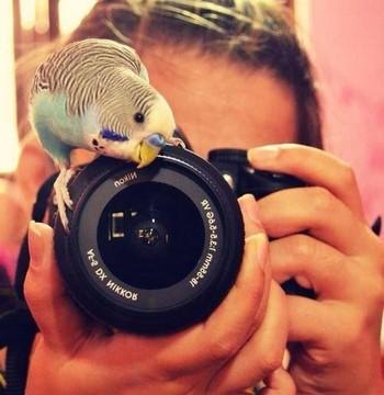 Попугай фотограф