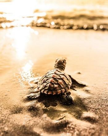 Прикольное фото черепахи и моря