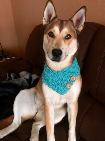 Собака с красивым голубым шарфом
