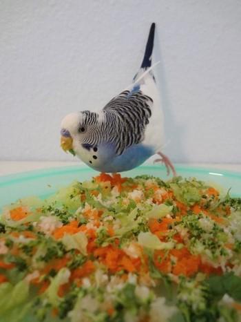 Волнистый попугай ест салат