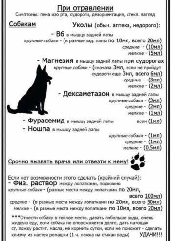 Что делать при отравлении собаки