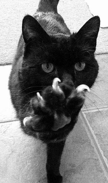 Кот показывает когти
