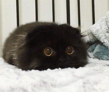 Смешной черный котенок