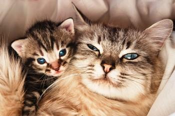 Довольная кошка и маленький котенок