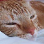 Грустный рыжий кот