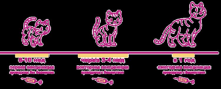 Стандартная схема вакцинации котят