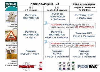 Три разные схемы вакцинации котят