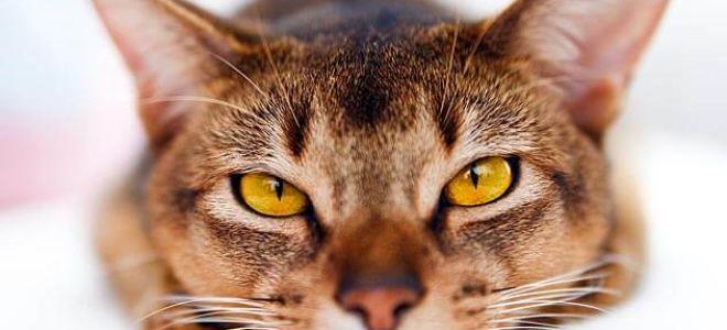 Внимательно смотрит кот