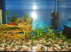 Внутренний фильтр в аквариуме