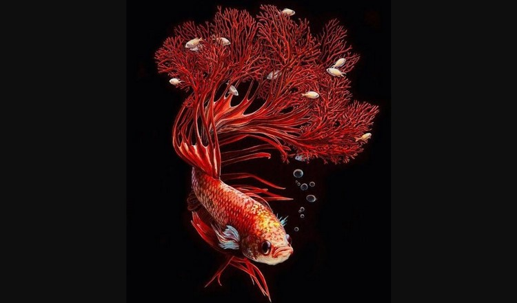 Красивое фото рыбки петушка