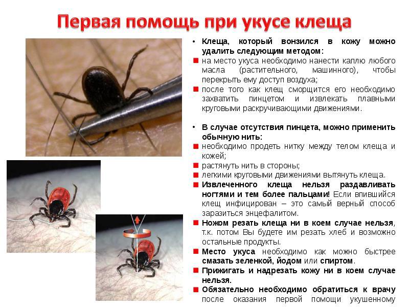 как вытащить паразитов из организма