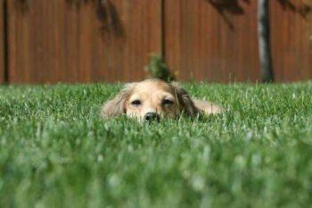 Собака сидит в траве и прячется