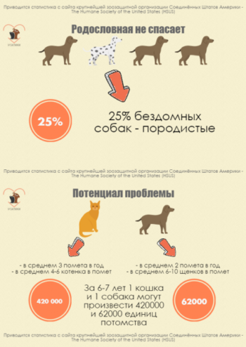 Проблема стерилизации животных