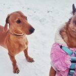 Смешная фотка собак