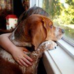 Собака смотрит в окно с ребенком