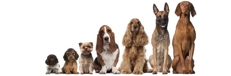 Собаки по росту