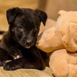 Черный щенок