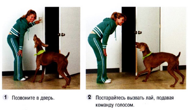Как заставить собаку гавкать