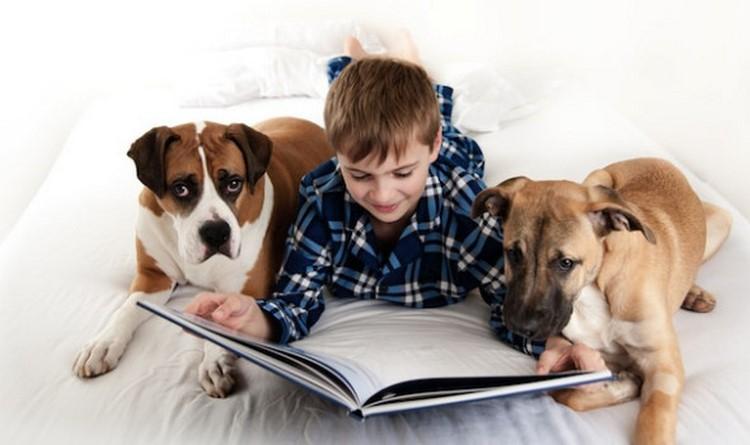 Мальчик и собаки