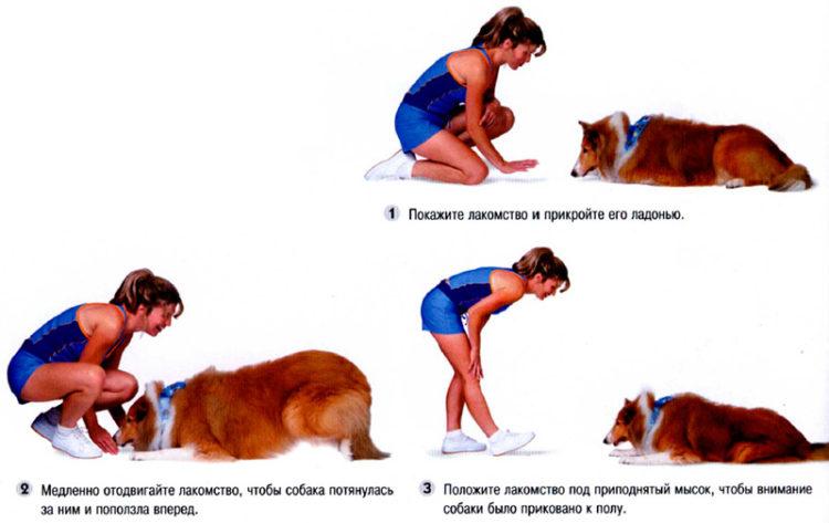 Научить собаку ползти