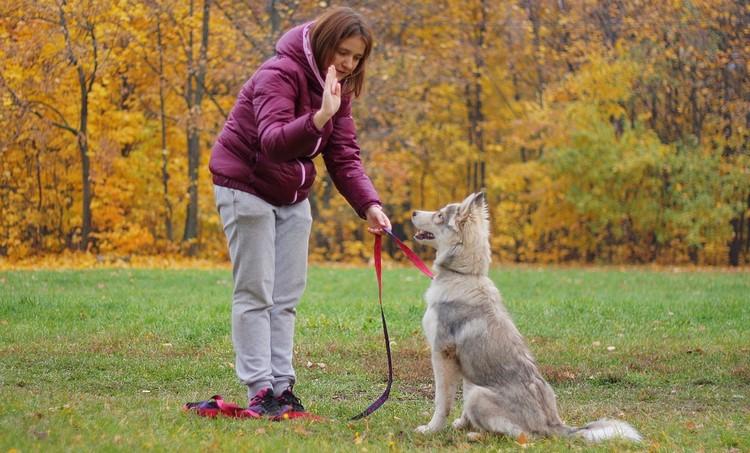 Обучение собаки сидеть