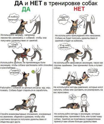 Правила дрессировки собак