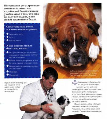 Причины боли в животе у собак